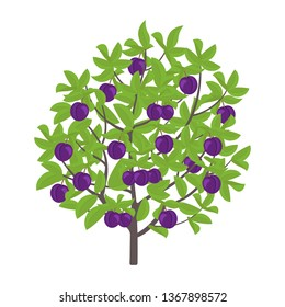 Blue Plum tree. Vector illustration. Damsons fruit tree plant. Flat vector color Illustration clipart. Ripe Prunus on a tree.