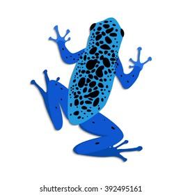Blue poison dart frog, flat design. Vector illustration of blue frog on white background. Poisonous frog. Isolated tree frog dendrobates azureus, top view