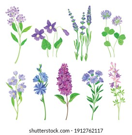 Blue and Purple Flowers on Green Stem as Meadow or Field Plant Vector Set