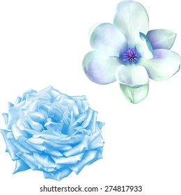 Blue rose flower and blue magnolia flower isolated on white Background. Vector illustration