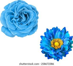 Blue rose and Mona Lisa flower, Blue flower, Spring flower.Isolated on white background.