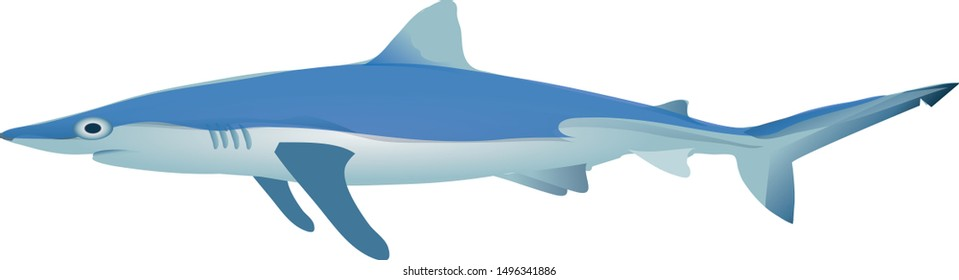 Blue Shark, Demersal, Marine Fish - Vector
