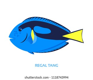Blue tang / Regal tang / Palette surgeonfish