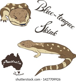 Blue tongue skink vector image isolated on white background. Blue-tongue lizard in full growth and head. Fauna Australia. Blue-tongued skink or tiliqua realistic design, reptile with tongue blue color