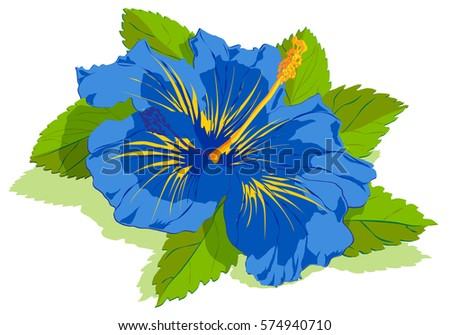 Blue Tropical Hibiscus Flower Leaves Stock Vector Royalty Free