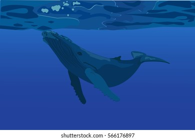 Blue Whale under water. vector stock illustration