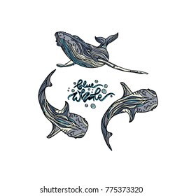 Blue whales with hand drawn caption vector illustration. Typography design elements for prints, cards, posters, products packaging, branding.