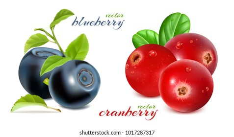 Blueberries and cranberries with leaves. Vector illustration