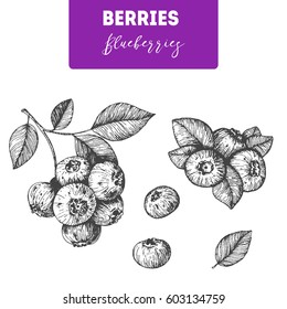 Blueberries hand drawn vector illustration set. Blueberry berries and leaf hand drawn sketch illustration. Engraved food image
