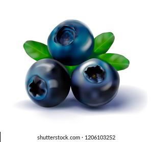 Blueberries and leaves isolated on white. Vector illustration.