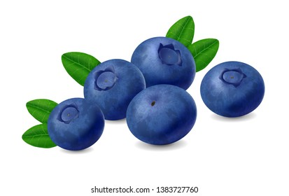 Blueberries with leaves isolated on white background. Realistic Vector illustration
