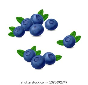 Blueberries with leaves isolated on white background. Realistic Vector berries set