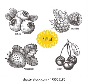 Blueberries, raspberries, strawberries and mulberries vector illustration. Set of berries skech.