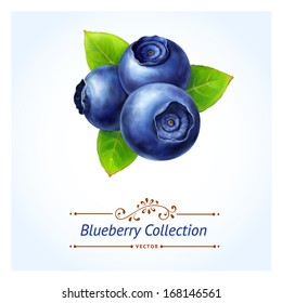 Blueberry, leaves and berries isolated on white background. Realistic digital paint. Vector illustration.