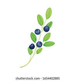 Blueberry Twig with Green Leaves Isolated on White Background Vector Illustration