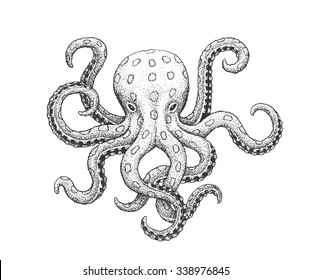 Blue-Ringed Octopus  - Classic Drawn Ink Illustration Isolated on White Background
