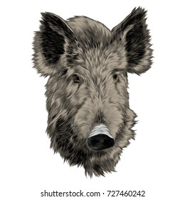 boar head sketch vector graphics color picture
