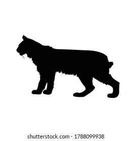 Bobcat silhouette, Lynx rufus vector illustration