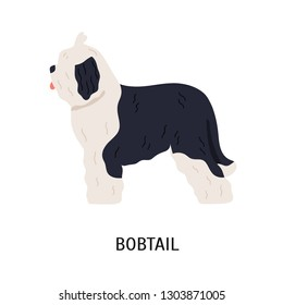 Bobtail or Old English Sheepdog. Funny large herding dog of long-haired breed isolated on white background. Lovely purebred domestic animal or pet. Colored vector illustration in flat cartoon style.