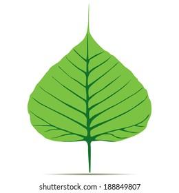 Bodhi (Sacred Fig) leaf Vector Illustration.
