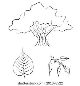 Bodhi tree or Ficus religiosa, hand drawn vector illustration
