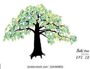 Bodhi tree ,on white background ,Vector illustration