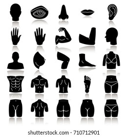 Body parts drop shadow black glyph icons set. Anatomy. Health care. Isolated vector illustrations