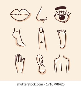 Body parts: lips, nose, ear, finger, pregnancy, back, leg on an isolated background. Black and white illustration of the human body. Concept: logo of a medical institution, education, Anatomy. Vector.