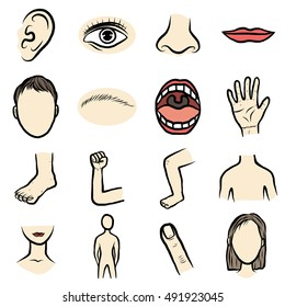 body parts, organ set/ cartoon vector and illustration, hand drawn style, isolated on white background.