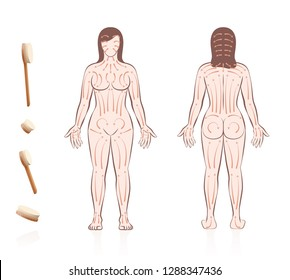Body skin brushing. Dry skin brushing with directions of brush strokes. Health and beauty treatment for skincare and massage, and to stimulate the blood circulation. Nude woman, front and back view.