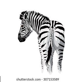 Body of a zebra with a tail.. Vector illustration.
