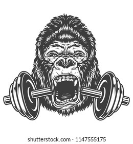 Bodybuilding concept with gorilla and cracked dumbell. Vector illustration.