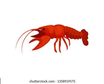 Boiled lobster on white background. Vector illustration.