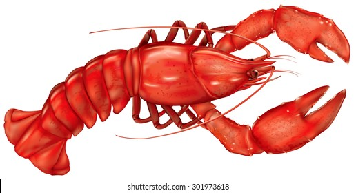 boiled lobster on a white background. vector illustration
