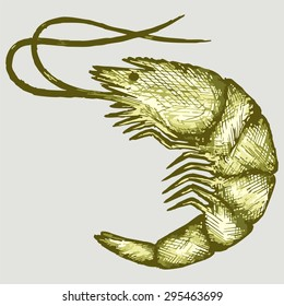 Boiled shrimp. Vector Image
