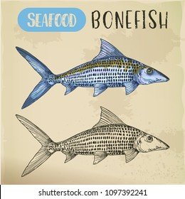Bonefish sketch for emblem or signboard for vegetarian seafood. Ocean or sea, river underwater fish. Sport fishing catch. Nautical and marine, underwater nature wildlife, aquatic theme