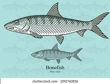 Bonefish. Vector illustration with refined details and optimized stroke that allows the image to be used in small sizes (in packaging design, decoration, educational graphics, etc.)