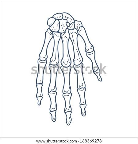 Bones Hand Skeleton Part Sketch Vector Stock Vector (Royalty Free ...