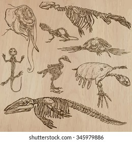 BONES, SKELETONS and Skulls of some Animals.Collection of an hand drawn vector illustrations.Freehand sketching.Each drawing comprise a few layers of lines. Background is isolated. Editable in groups.