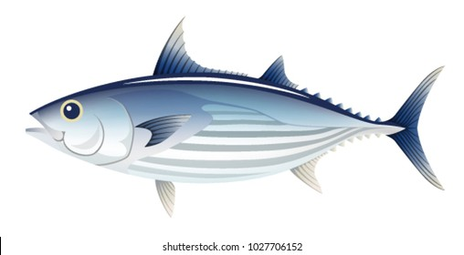 The bonito, isolated on the white background.