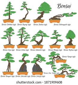 Bonsai. Different styles of miniature trees. The art of growing dwarf plants.