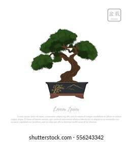 """Bonsai tree in pot on white background. Text in japanese: """"Bonsai"""". Vector illustration"""