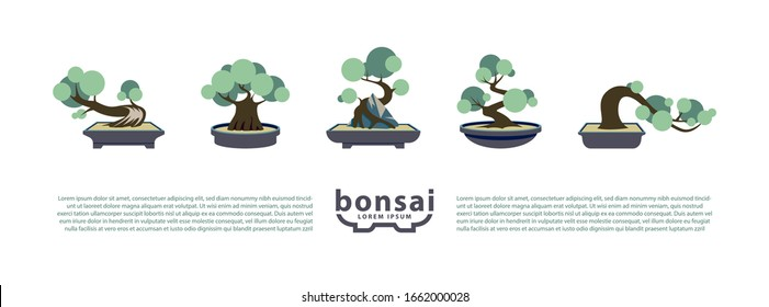 Bonsai Hd Stock Images Shutterstock