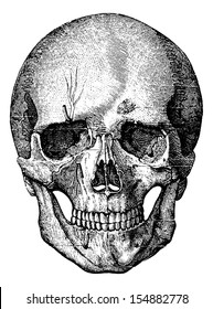Bony skeleton of the face and the anterior part of the skull, vintage engraved illustration. Usual Medicine Dictionary - Paul Labarthe - 1885.