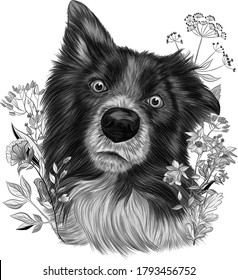 The border collie Brittany Spaniel dog  black and white monochrome with flowers vector illustration
