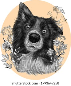 The border collie Brittany Spaniel dog  black and white monochrome with flowers on a pink background vector illustration
