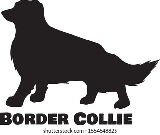 Border Collie Dog Breed Silhouette On White Background Vector Illustration