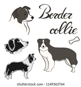 Border collie dog breed vector illustration set isolated. Doggy image in minimal style, flat icon. Simple emblem design pet shop, zoo ads, label design animal food package element. Realistic dog sign.