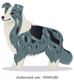 Border Collie dog marble vector illustration