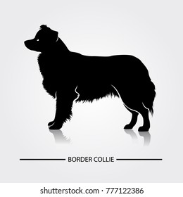 Border Collie Dog vector silhouette. Black silhouettes of breeds of dogs.